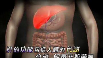 【走近韓醫】調節新陳代謝的臟器-肝臟