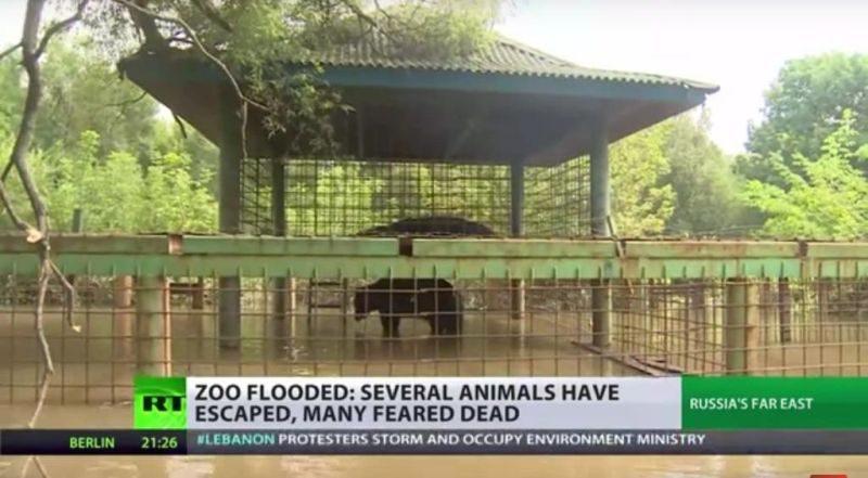 俄远东豪雨 园长落跑 动物泡水溺毙