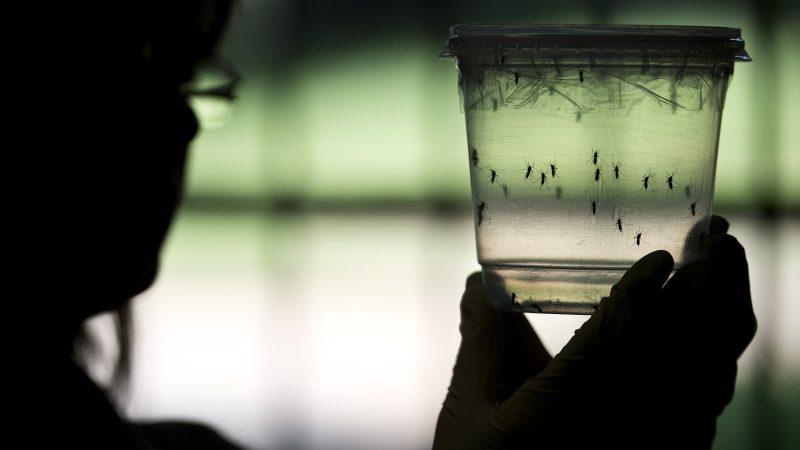 兹卡病毒蔓延拉美20国 脑畸形新生儿病况复杂