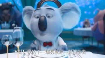 【大千世界】欢乐好声音 动物世界的歌唱选秀大赛