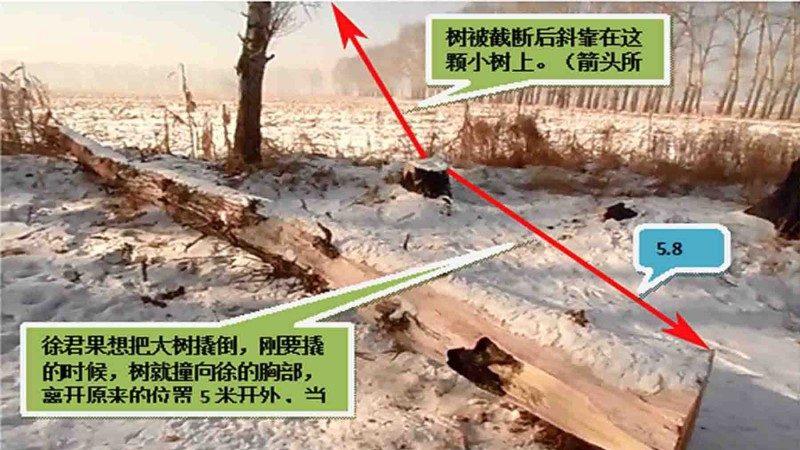 执意砍树造成一死一伤  村民:树长了眼睛