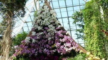 第15屆紐約蘭花展  展現泰國繽紛色彩