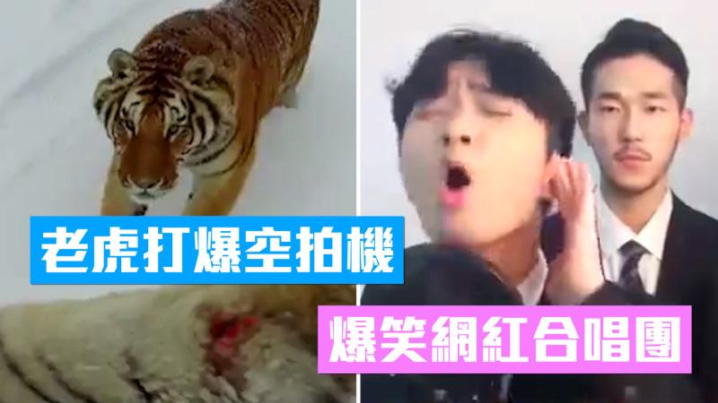 【一週熱門影片】東北虎打爆空拍機、中國製無盡頭泳池、超強網紅歌手