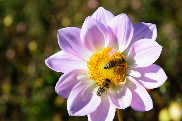 蜂蜜水這樣喝3天,有效排毒減肥!