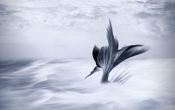 我所知道的地球历史与奥秘(四):美人鱼传奇