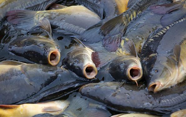 3種人不能吃魚,看看有沒自己,別犯忌