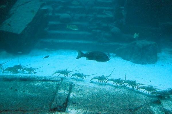 揭秘:1万年前文明古国 一夜间沉入海底