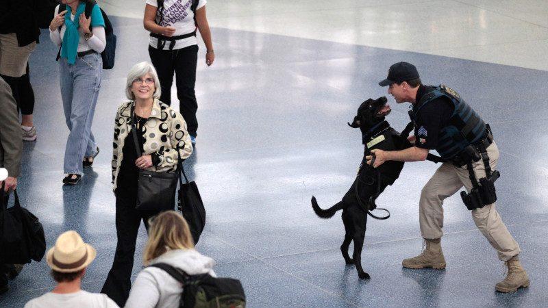 紐約警方使出秘密武器 感恩節遊行輕煙犬上陣