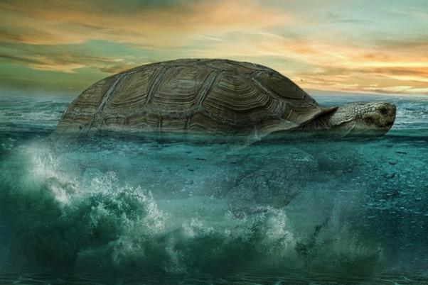 大龜引路出困境 無故殺龜遭暴死