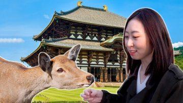 慧秀在日本:與中國有淵源的奈良東大寺 與 懷石料理