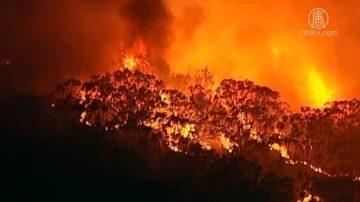 悉尼郊區爆發叢林大火 五百消防員奮戰