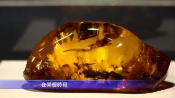 莫斯科琥珀展 窥7500年前地球痕迹