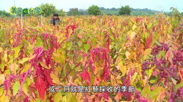 美麗心台灣:魯凱族張誌紜 領家族種紅藜