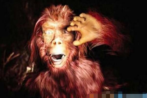 6官員驚遇神農架「野人」:長著驢臉全身紅毛