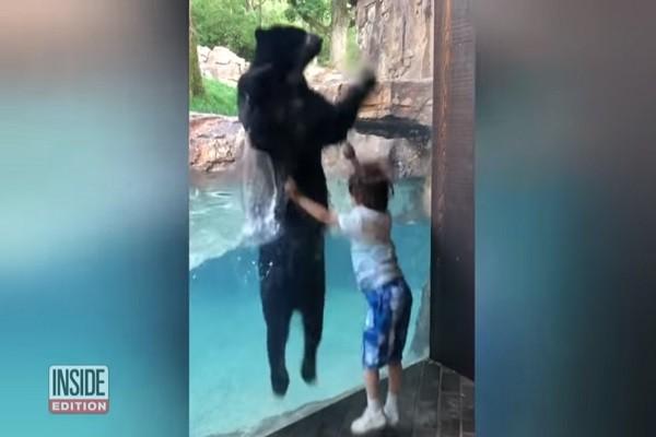 """你跳我跟着跳 男童竟吸引黑熊与他隔窗""""共舞"""""""