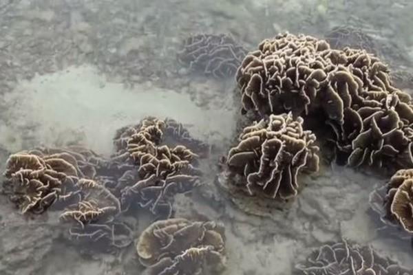 罕见潮汐!水位下降1米 海底生物全曝露(视频)