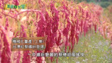 美麗心台灣:機械化量產 台灣紅藜繽紛登場