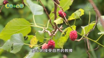 美麗心台灣:在自然中學習 黎旭瀛夫婦力推自然農法