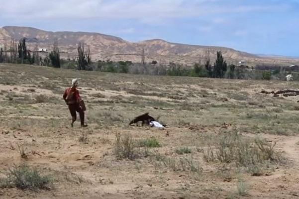看金鵰表演 8歲女童被當獵物飛撲啃食