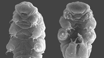日本發現約一毫米小動物 可在太空存活