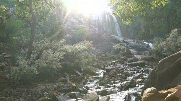 野花瀑布 西澳大利亚春意盎然