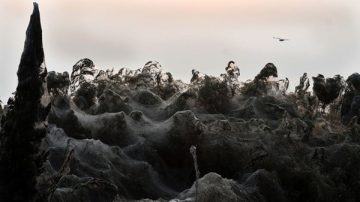 驚現一公里巨型蜘蛛網 希臘湖畔似披白紗