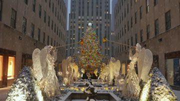 紐約最大最華美 洛克斐勒聖誕樹即將登場
