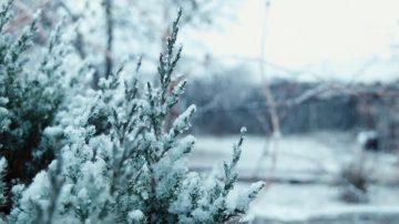 感恩節週末大降溫 闔家團圓時注意保暖
