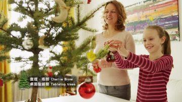 打造最符合心意的裝點 紐約購聖誕樹貼士