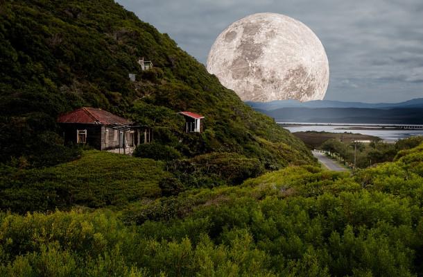 月亮里的天丹树