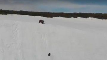 老鷹空中虎視眈眈 母熊焦急萬分 看小熊如何化險為夷