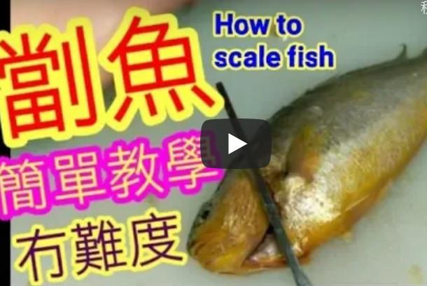 急冻鱼处理超简单 两刀就清干净(视频)