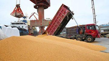 困境難解 中共擬重購美國大豆做國家儲備