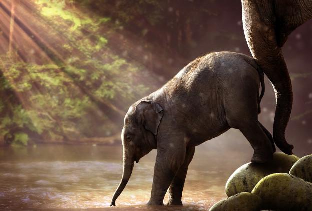 知恩报恩的大象