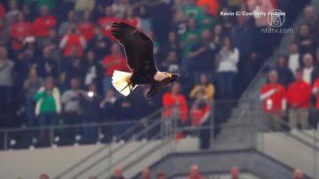 美國大學橄欖球賽 白頭海鵰突襲搶風頭