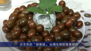 """日本来的""""琥番茄"""" 台湾生根盼进军国际"""