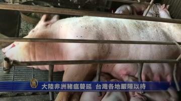 大陆非洲猪瘟蔓延 台湾各地严阵以待