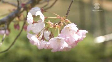 春季养肝好时节 疏肝理气重调养