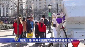 新法上路 中央公园观光马车或将逐渐消失