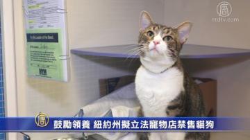 鼓勵領養 紐約州擬立法寵物店禁售貓狗