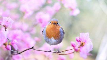 春分風物新 養生解春困