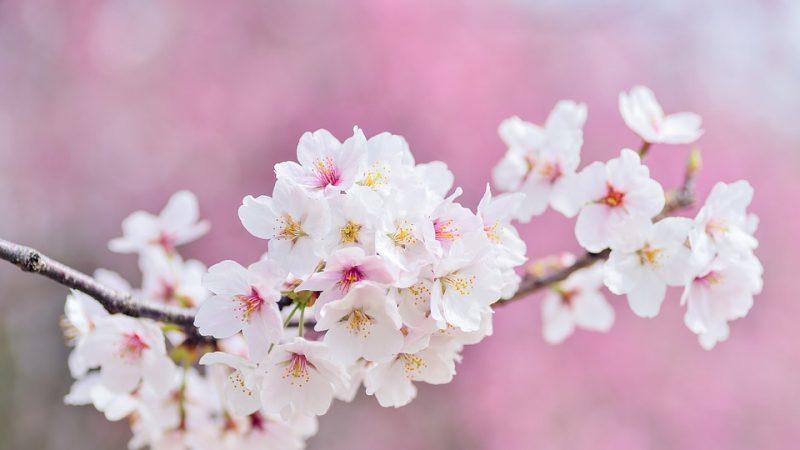 天人合一的养生观:春捂秋冻